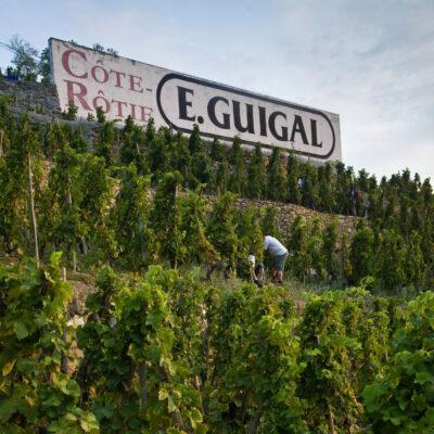 Producer Profile: E. Guigal