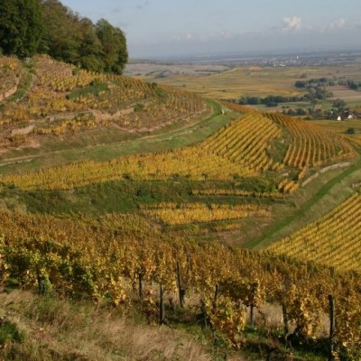 Producer Profile: Domaines Schlumberger