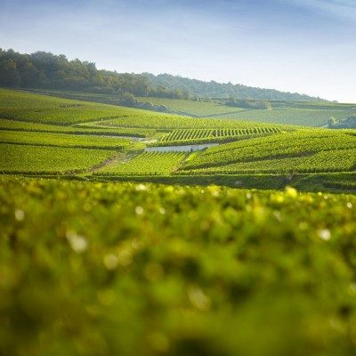 Producer Profile: Champagne Pierre Paillard