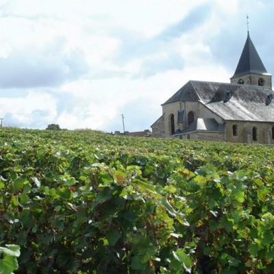 Producer Profile: Champagne Gardet