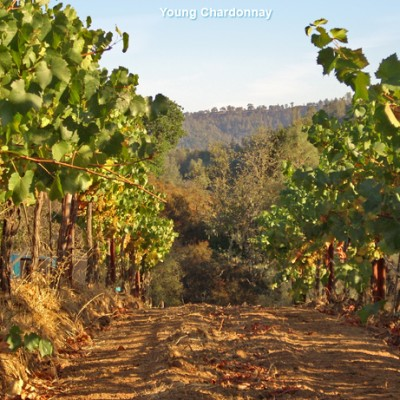 Producer Profile: Calera Wine Company