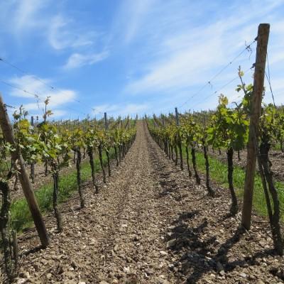 Producer Profile:  Vinaceous Wines