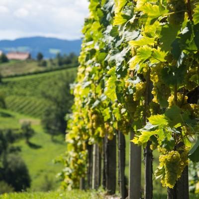 Vinexxpert Wine Tips