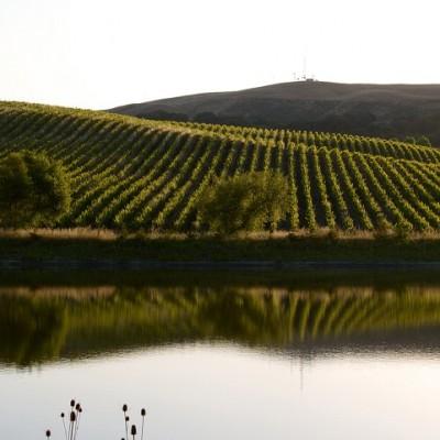 Cline Cellars 2013 Chardonnay