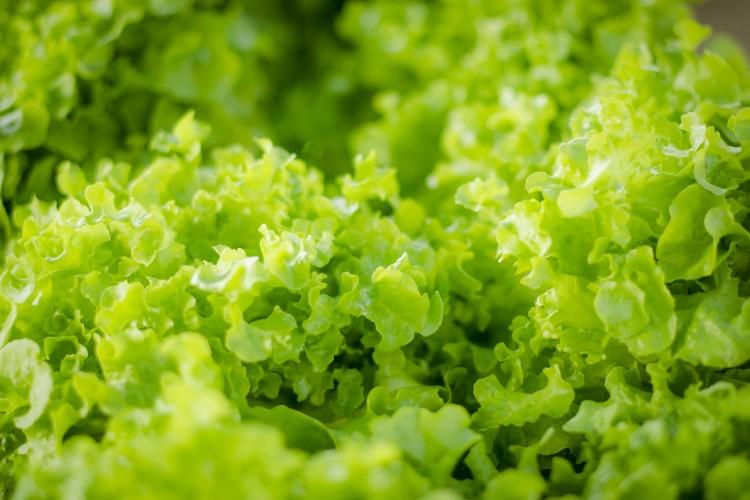 5 Stunning Spring Salad Recipes & Wine Picks