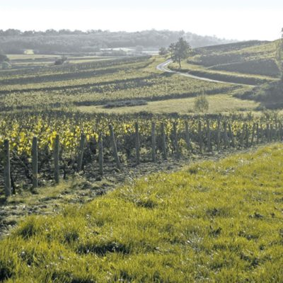 Pick of the Week:  Delicious White Burgundy…Under $20!