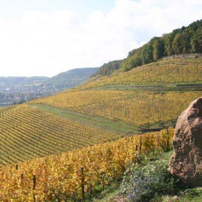 "#WineWednesday Spotlight:  Domaines Schlumberger 2014 Pinot Gris ""Les Princes Abbés"""