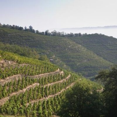 Pick of the Week: E. Guigal 2012 Crozes-Hermitage Rouge