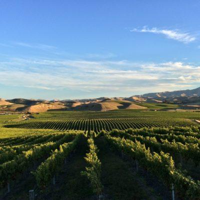 Rapaura Springs 2015 Sauvignon Blanc