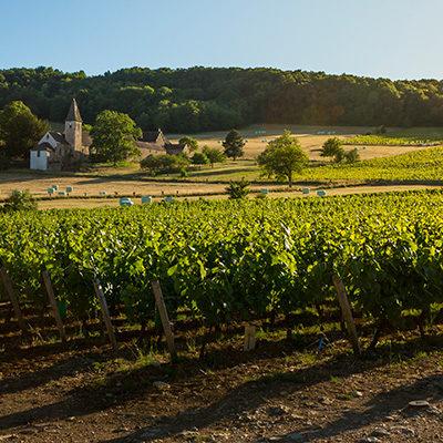 """Vignerons de Buxy 2014 Montagny """"Buissonnier"""""""