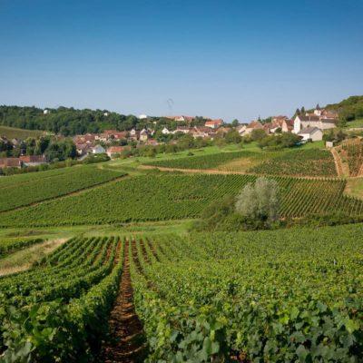 """Vignerons de Buxy 2016 Montagny 1ER Cru """"Buissonnier"""""""