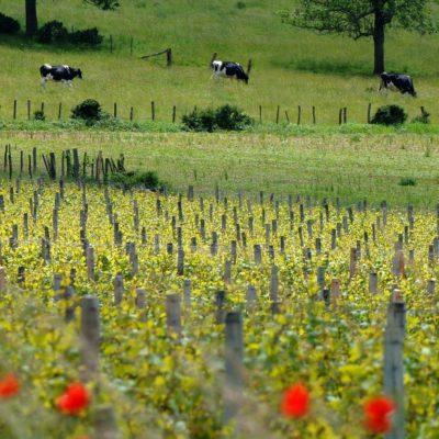 Terres Secrètes 2015 Mâcon La Roche-Vineuse