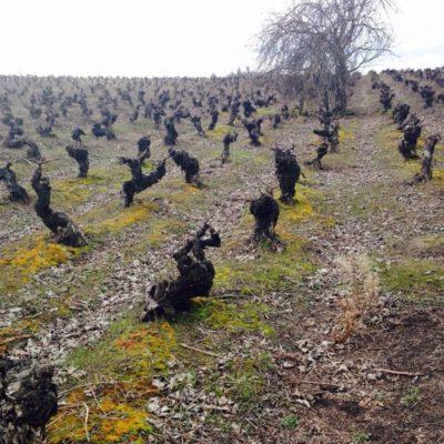 Cacique Maravilla 2017 Sauvignon Blanc
