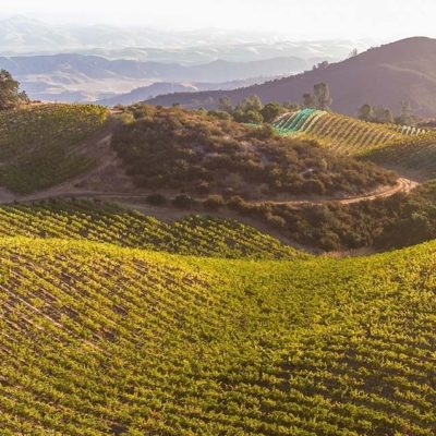 RobertParker.com on Calera 2015 Central Coast Pinot Noir 40th Anniversary Vintage
