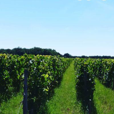 Nuiton-Beaunoy 2015 Bourgogne Pinot Noir