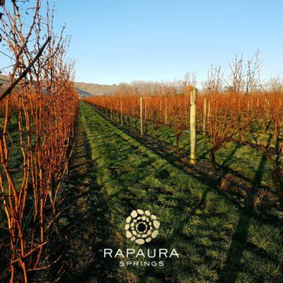 Rapaura Springs 2017 Reserve Sauvignon Blanc