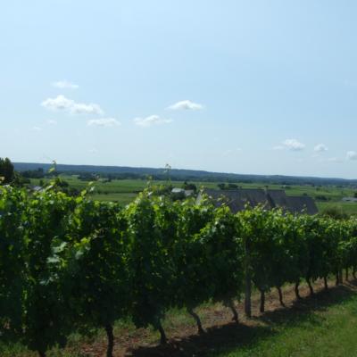 Alliance Loire 2015 Domaine de Matabrune Bourgueil Rouge
