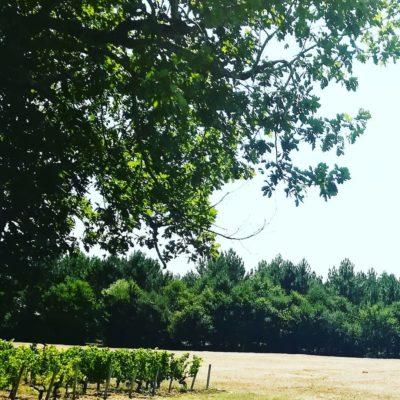 Nuiton-Beaunoy 2015 Volnay