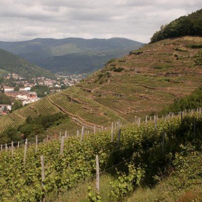 Domaines Schlumberger 2012 Kessler Pinot Gris Alsace Grand Cru